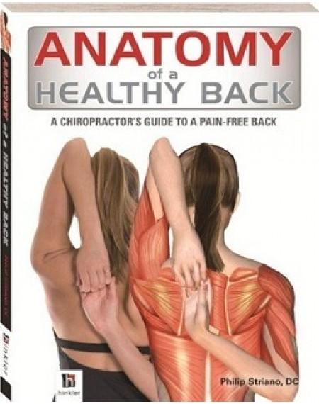 Anatomy Of Healthy Back